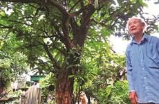 Le dernier jardin médicinal de Dai Yên