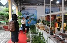 HCM-Ville: La valeur de production agricole augmente de 6,5% au mois de janvier