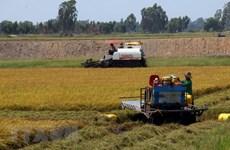 Le delta du Mékong cherche à transformer les défis agricoles en opportunités