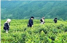 Le groupe sud-coréen Agerigna cherche à collaborer avec Cao Bang dans l'agriculture
