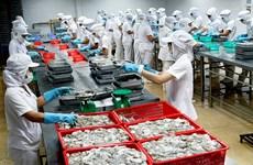Montée en flèche des exportations nationales de céphalopodes aux Etats-Unis
