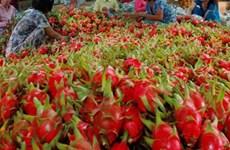 La part de marché des fruits et légumes vietnamiens en Europe ne s'élève qu'à 0,9%