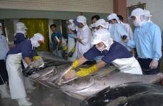 Bond des exportations nationales de thon au Chili