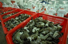 De nouvelles opportunités pour les exportations nationales de crevettes vers l'UE