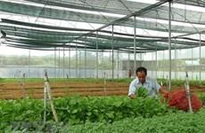 Les exportations nationales de fruits et légumes ont le vent en poupe