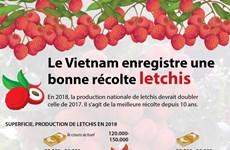 Le Vietnam enregistre une bonne récolte de letchis