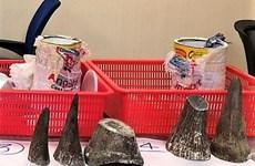 Saisie de cornes de rhinocéros à l'aéroport de Tan Son Nhat