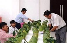 Des concours qui créent une saine émulation entre les paysans