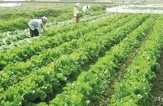 Les zones suburbaines de Hanoï font peau neuve