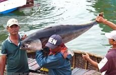 """Le Vietnam s'efforce de retirer le """"carton jaune"""" de l'UE en matière de pêche"""