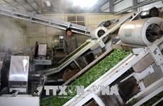 Les exportations de thé en berne