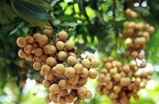 Hung Yen cherche à développer le commerce de ses longanes