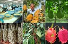 IGP: Vietnam au 2e rang des pays Sud-Est asiatiques ayant le plus de produits agricoles protégés