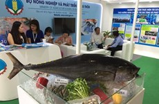 Les exportations du thon du Vietnam vers l'Asie et le Proche-Orient en forte hausse