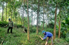 Le pays plante 130.858 ha de forêt de production