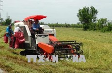 Vietnam et Japon partagent des expériences de développement des produits agricoles