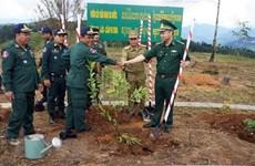 Plantation d'arbres au carrefour des frontières Vietnam - Laos - Cambodge
