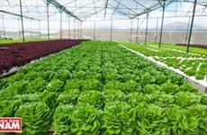 Lam Dong arrive en tête dans l'attrait des IDE dans l'agriculture de haute technologie