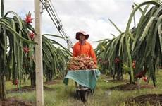 Colloque sur la promotion de la consommation des fruits du dragon de Binh Thuan en Inde