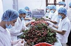 Exportations de fruits et légumes en forte hausse