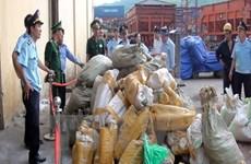 Saisie d'un grand lot de défenses d'éléphants et d'écailles de pangolin à Hanoï