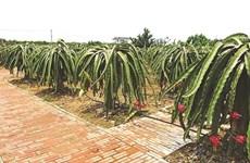 Viêt Dân, commune exemplaire dans l'édification de la Nouvelle ruralité