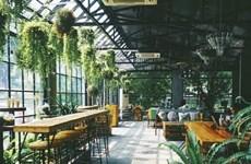Tropical forest, lieu où on boit le café en contemplant des arbres
