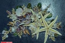 Des œuvres d'art en coquilles d'escargot réalisées par une handicapée