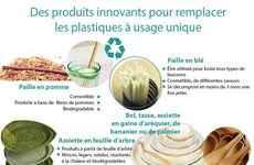 Des produits innovants pour remplacer les plastiques à usage unique