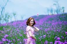 """Admirer la magnifique """"vallée des fleurs"""" à Fansipan"""