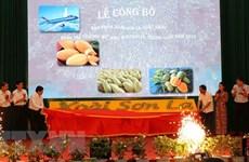 La mangue de Son La est exportée vers des marchés exigeants
