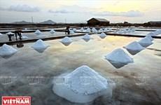 Les villageois de Hon Khoi s'efforcent de préserver la saliculture