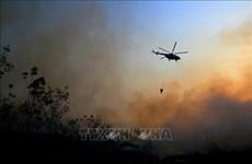 L'Indonésie mobilise des milliers de personnes pour lutter contre les feux de forêt