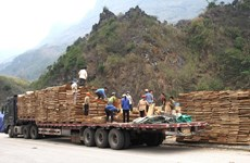 COVID-19: premiers lots d'exportation autorisés à la porte frontalière de Thanh Thuy
