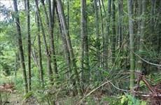 Thanh Hoa : plus de 17.000 ha de forêts aux normes FSC