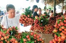Les exportations de fruits et légumes atteignent plus 1,5 milliard de dollars en six mois