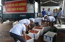 """Hai Duong exporte le premier lot de litchi """"Thieu"""" vers le Japon"""