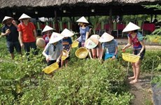 Ho Chi Minh-Ville lance sept programmes de tourisme écologique et agricole