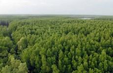 Protéger la mangrove de Can Gio, le mur vert de Ho Chi Minh-Ville