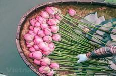 Découvrir l'extraordinaire art de l'aromatisation du thé au lotus des Hanoïens