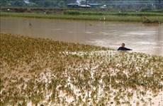 De fortes pluies causent de lourds dégâts à Lao Cai et Dak Nong