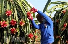 L'Inde et le Vietnam ont un grand potentiel pour promouvoir l'exportation de fruits