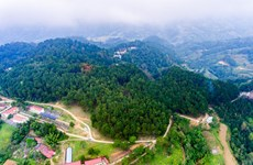 À la découverte de la forêt de pins Yen Minh, à Ha Giang