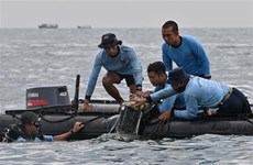 Crash d'une avion: message de condoléances à l'Indonésie