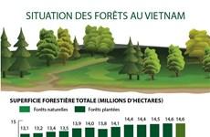 Situation des forêts au Vietnam
