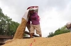 Kien Giang  : exportations en hausse de plus de 12% en deux mois