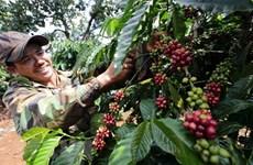 Exportations des produits agricoles, sylvicoles et aquatiques en hausse en trois mois
