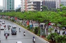 Le Vietnam lance son plan visant à planter un milliards d'arbres