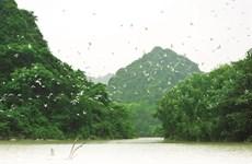 Le site écologique du jardin aux oiseaux de Thung Nham à Ninh Binh