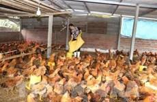 CPTPP: défis et opportunités pour le secteur de l'élevage au Vietnam
